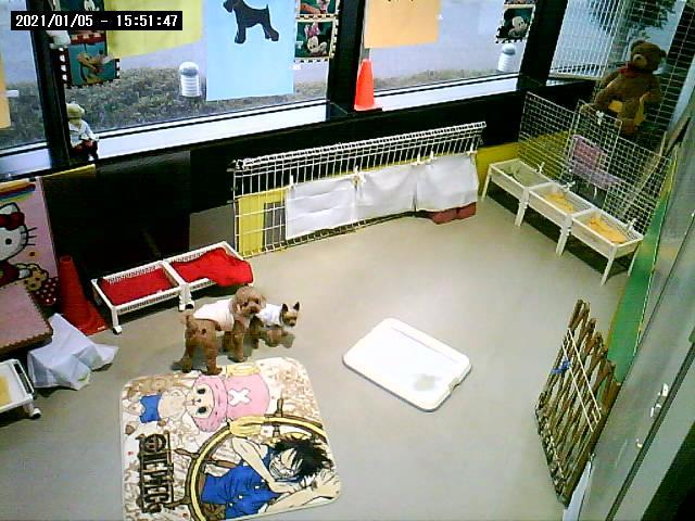 ライブカメラ1